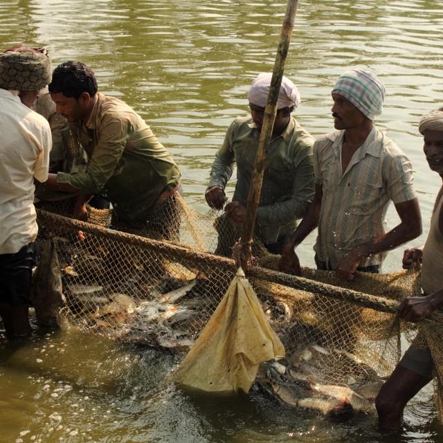 """""""Fish farming"""" stock image"""