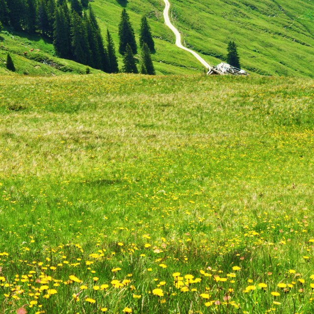 """Austrian Meadow"" stock image"