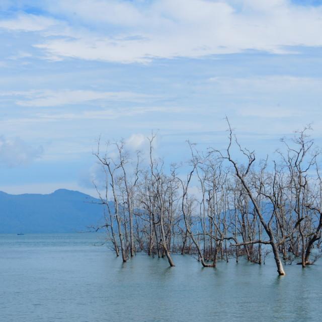 """""""mangroves..."""" stock image"""
