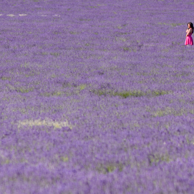 """Girl in a Lavender Field"" stock image"