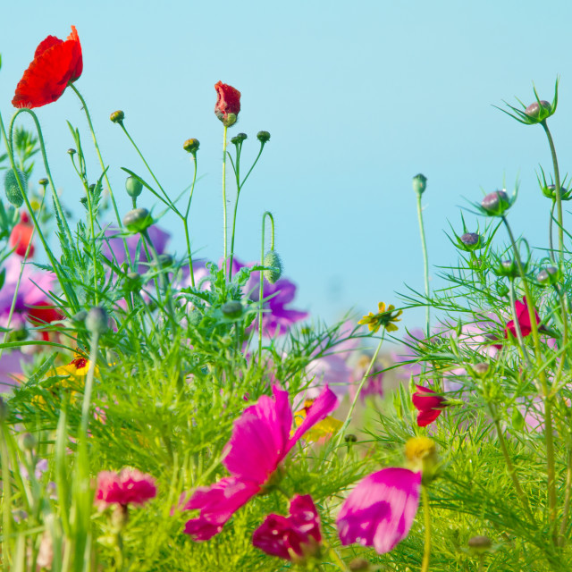 """Country flowers"" stock image"