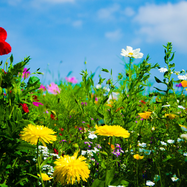 """Wild colorful flowers"" stock image"
