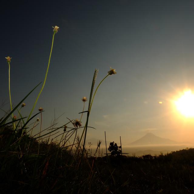 """Morning Grass"" stock image"
