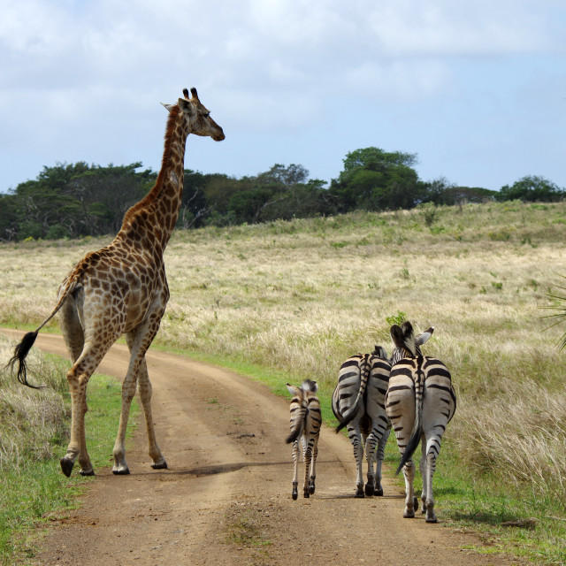 """Traffic jam in Africa"" stock image"