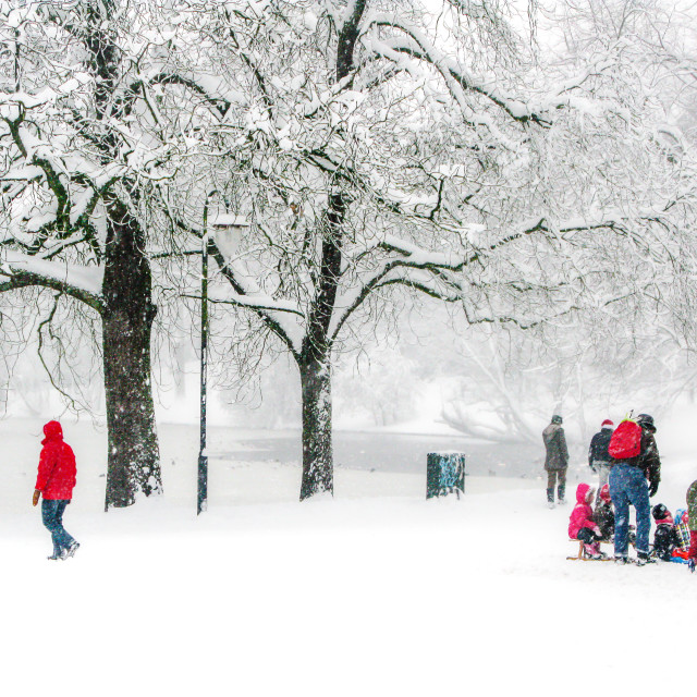 """""""A snowy day in the park"""" stock image"""