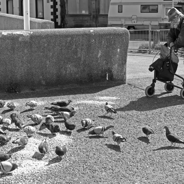 """Man feeding pigeons"" stock image"