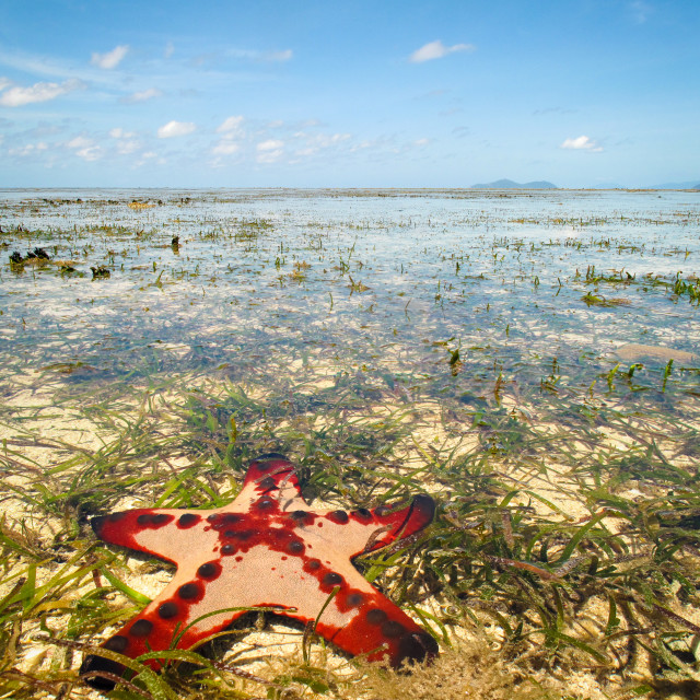 """Starfish on the Great Barrier Reef"" stock image"