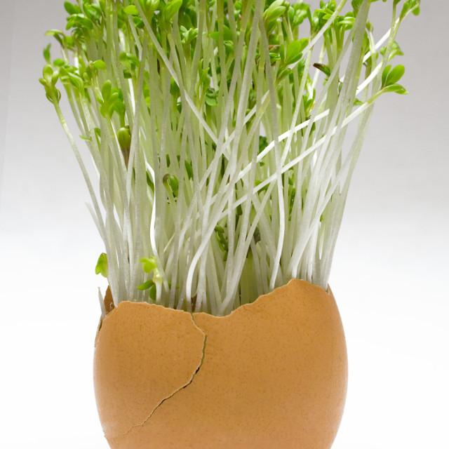 """""""Spring Easter Egg"""" stock image"""