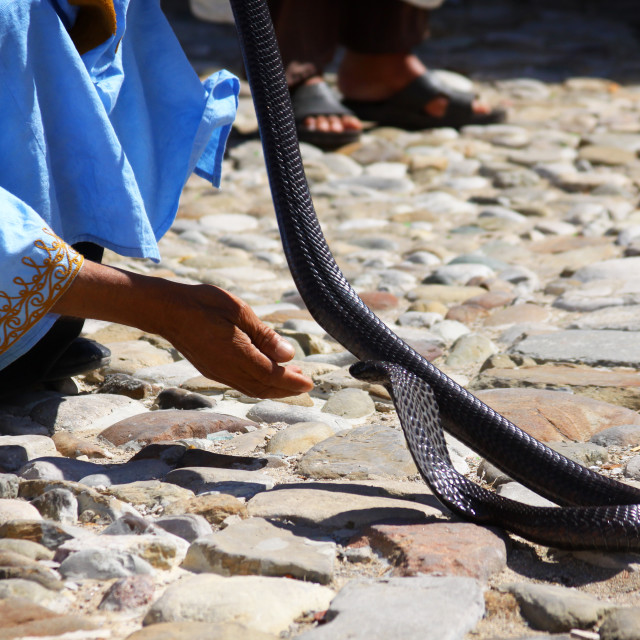 """Snake Charming in Tangier, Morocco"" stock image"