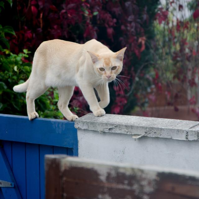 """""""Cat looking menacing"""" stock image"""