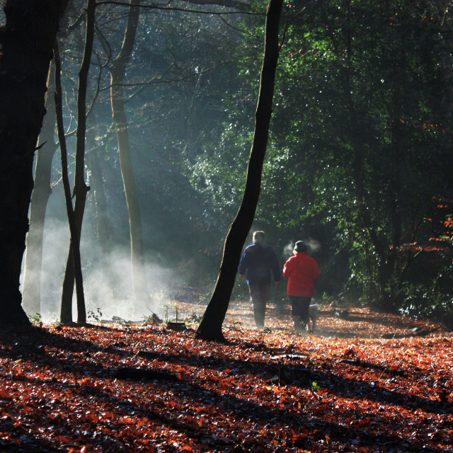 """A Brisk Morning Walk in Epping Forest's Misty Autumn Atmospher"" stock image"
