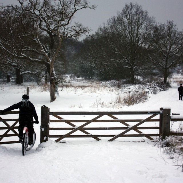 """Winter landscape in England's Epping Forest"" stock image"