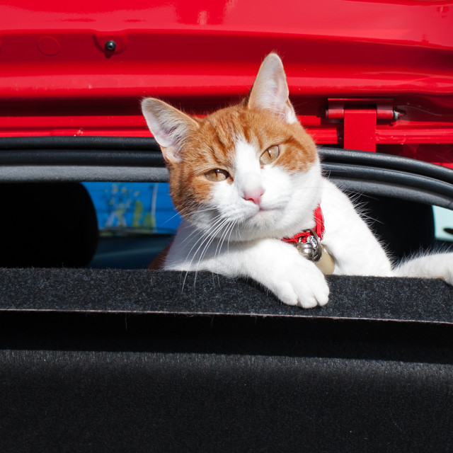 """Puss in boot"" stock image"