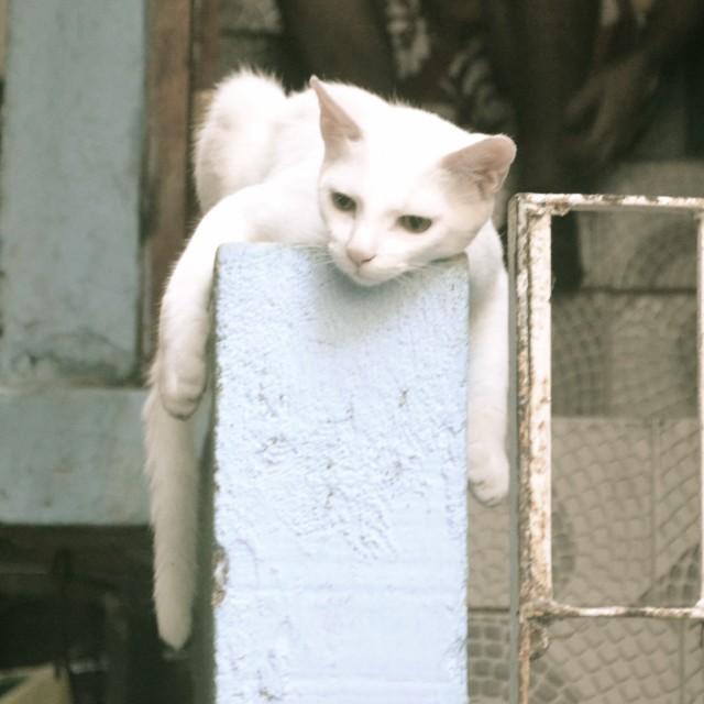 """Favela Cat"" stock image"