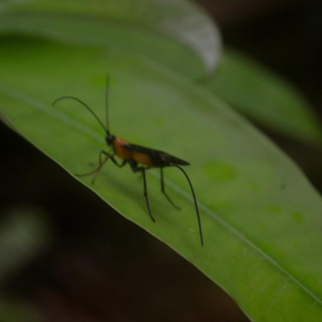 """Big Bug"" stock image"