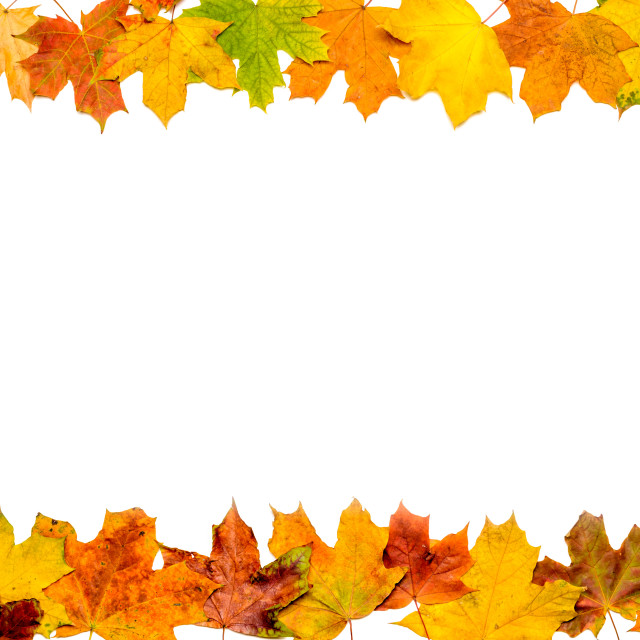 """Autumn Leaves Frame (up and down)"" stock image"