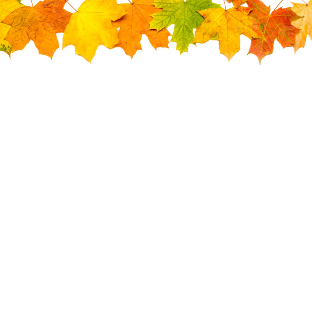 """Autumn Leaves Frame (Up and Right)"" stock image"