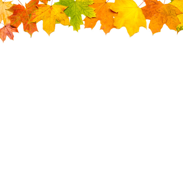 """Autumn Leaves Frame (Up and Left)"" stock image"