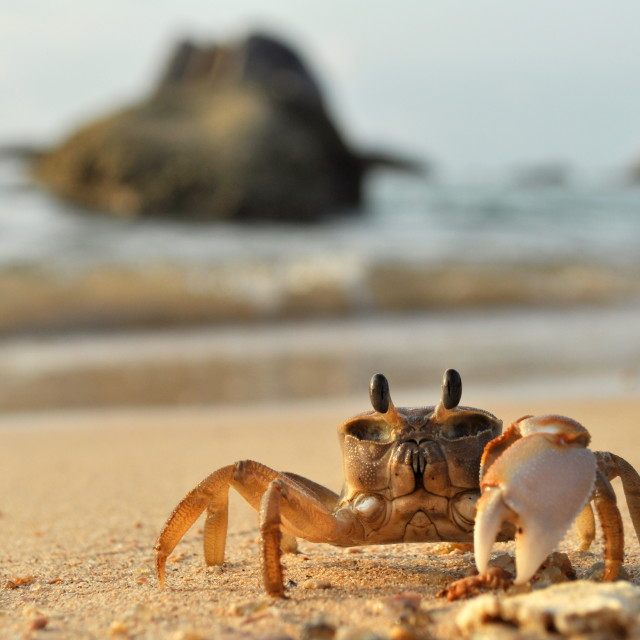 """Beach crab"" stock image"