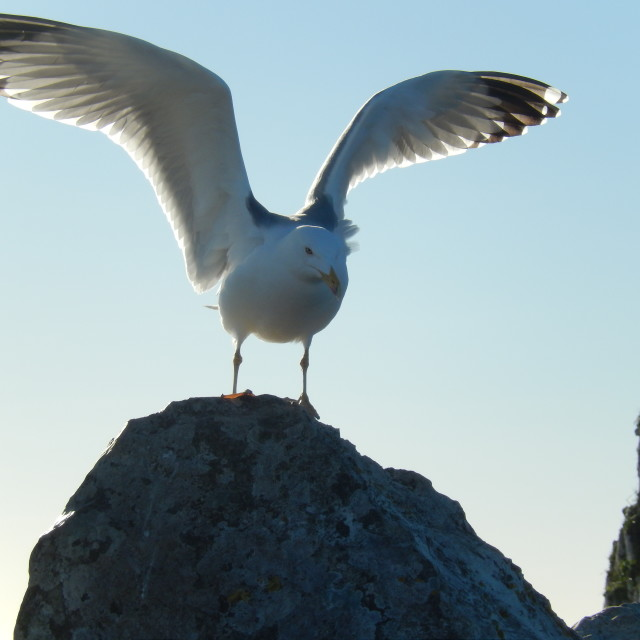 """The Sea Gull"" stock image"