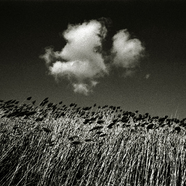 """Reeds & Clouds"" stock image"