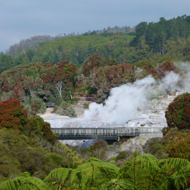 """Steaming hot springs, NZ"" stock image"