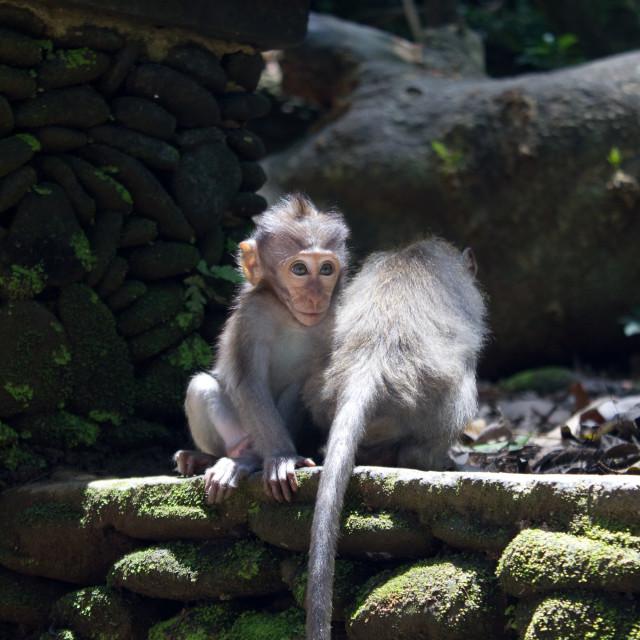 """""""Monkey Forest"""" stock image"""