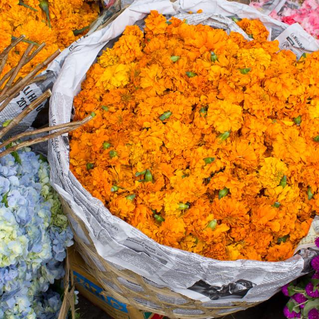 """Marigolds"" stock image"