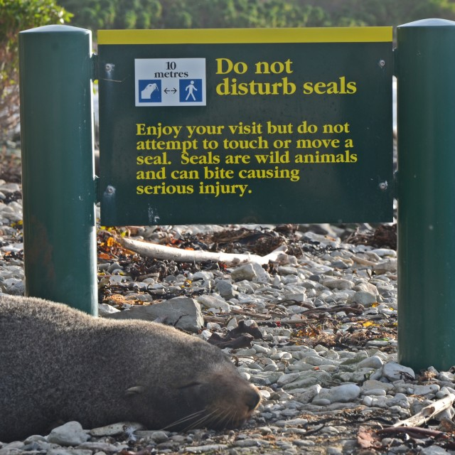 """Don't Disturb the Seals"" stock image"
