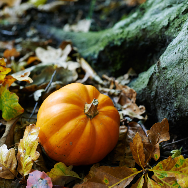 """A Pumpkin in the woods"" stock image"