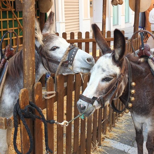 """Donkeys At The Fair"" stock image"
