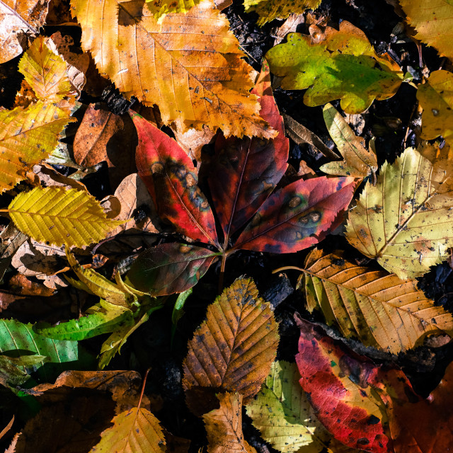 """""""Collection of fallen leaves"""" stock image"""