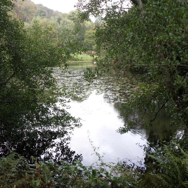 """""""Majestic Pond"""" stock image"""