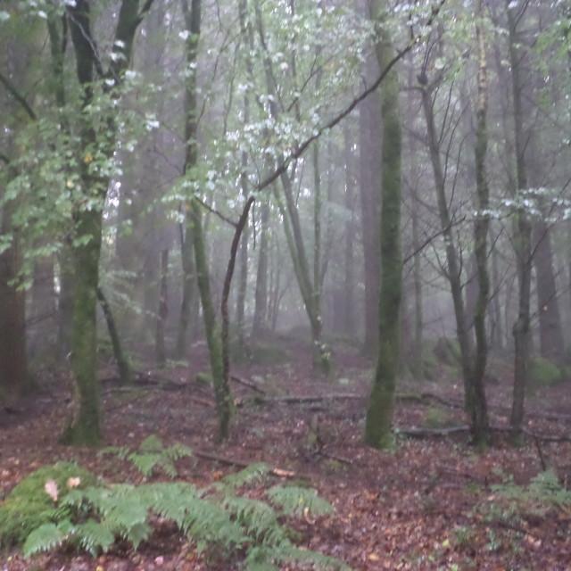 """Haunted Woods"" stock image"