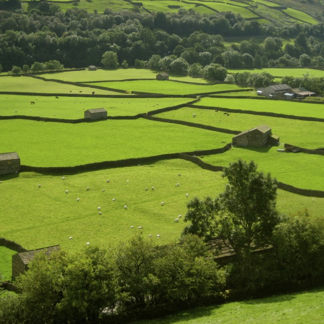 """Dales Field Barns"" stock image"