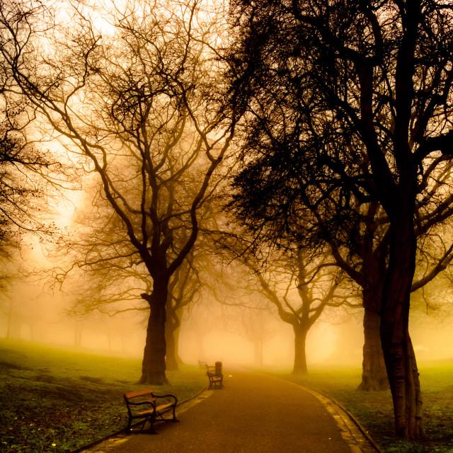 """""""Shrouded in fog"""" stock image"""
