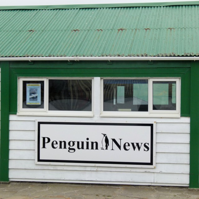 """News for penguins"" stock image"