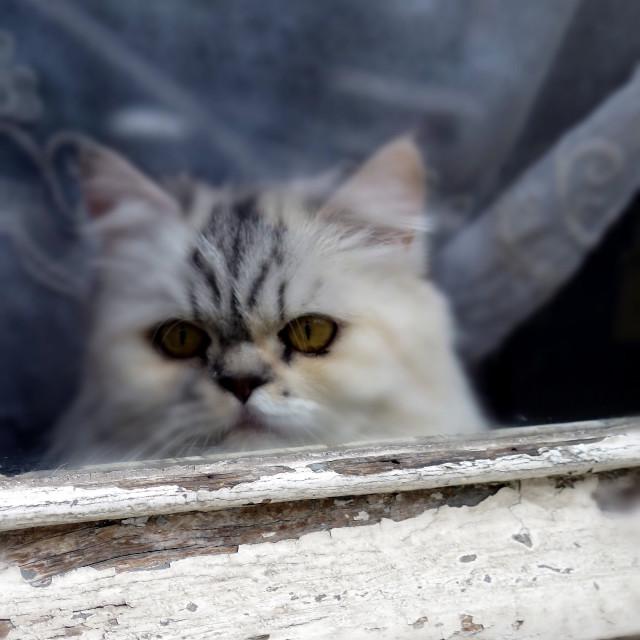 """Parisienne Kitty"" stock image"