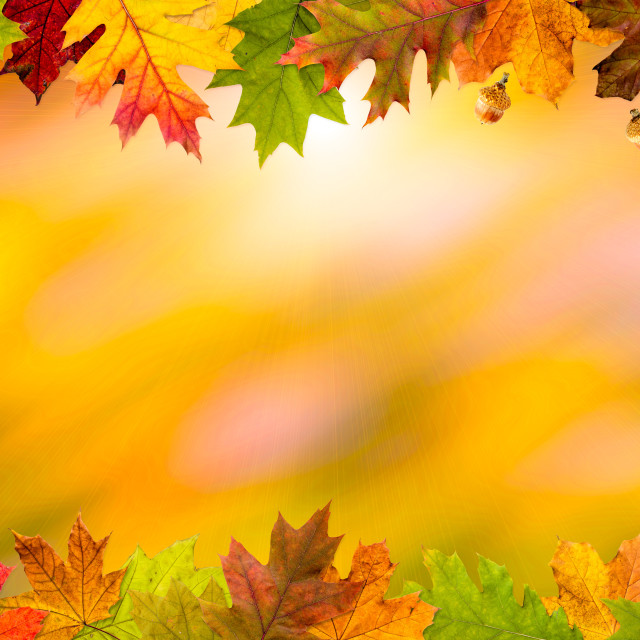 """Autumn Leaves Frame"" stock image"