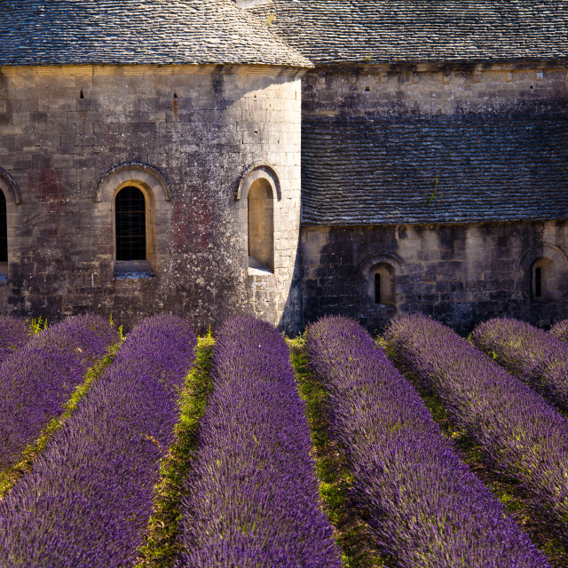 """Provence, France"" stock image"