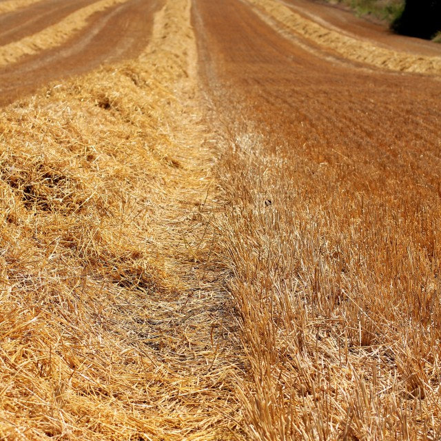 """""""Golden Ploughed Wheat Field Textures"""" stock image"""