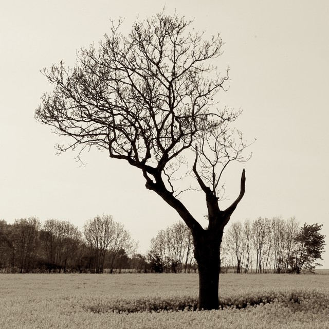 """""""Naked and Vulnerable Leafless Tree"""" stock image"""