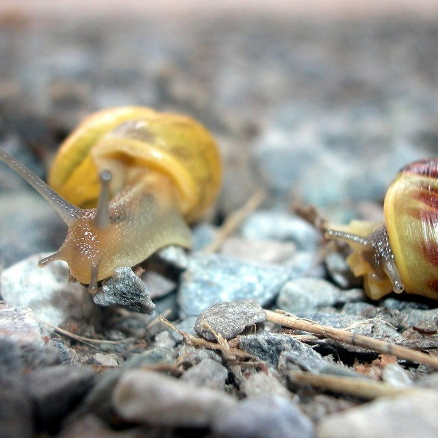 """Snails in love"" stock image"