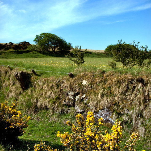 """""""Moorland Colour"""" stock image"""