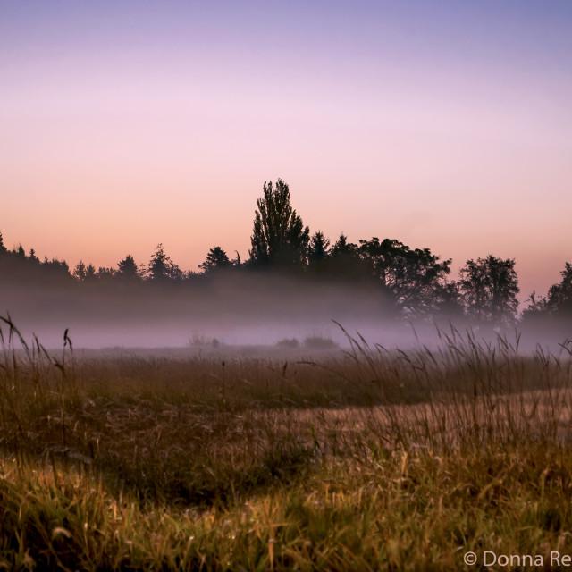 """""""Tule Fog #1"""" stock image"""