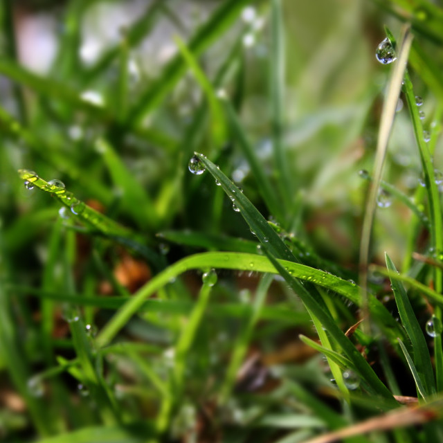 """Dew Drops"" stock image"