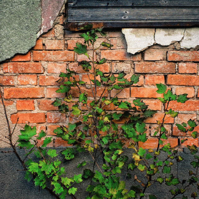"""Brick and bush"" stock image"