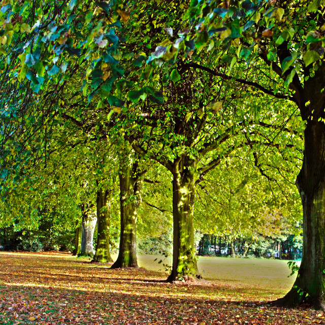 """A park in early autumn"" stock image"