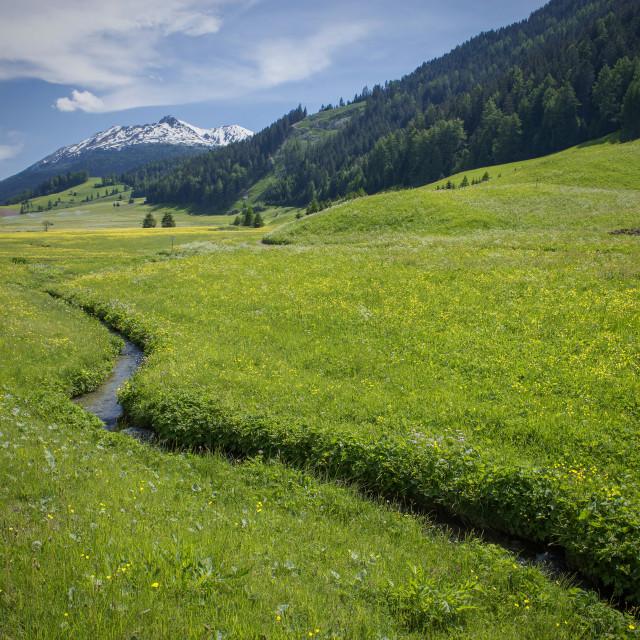 """""""Wild Alps"""" stock image"""