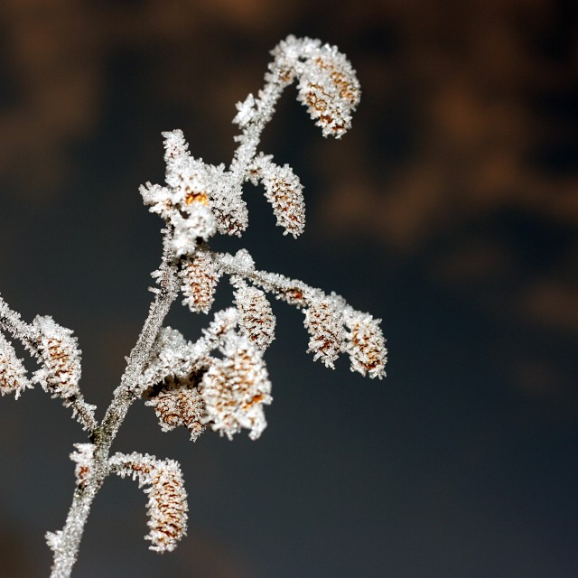 """Frozen winter tree branch"" stock image"